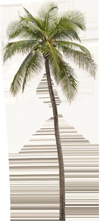 palmtree image